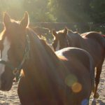 Everything you need to know about horse therapy